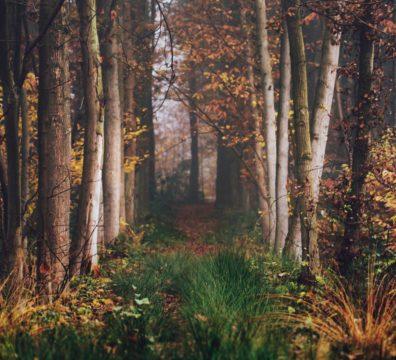 und wird in den Alleen hin und her unruhig wandern, wenn die Blätter treiben