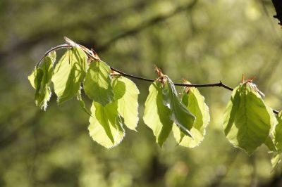 einssein Frühling natur